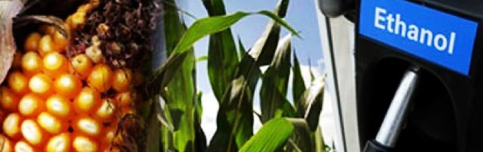 Etanol: Milho dos EUA ameaça domínio da cana brasileira no Japão