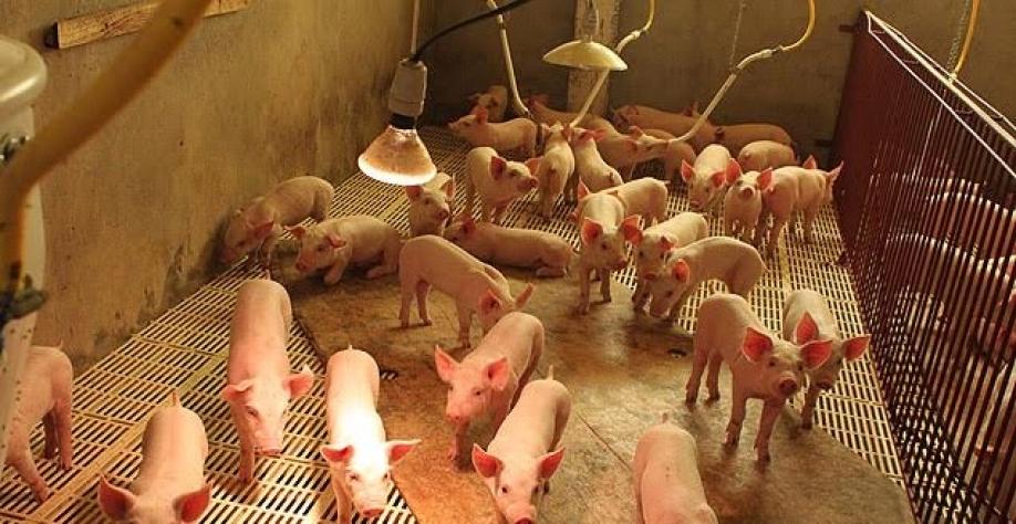 Copa do Mundo pode encurtar barreira russa à carne brasileira