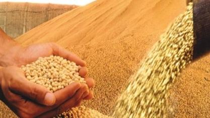 Soja em grãos bate recorde de volume exportado em novembro