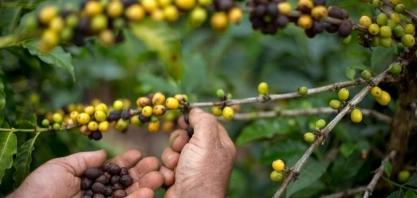 O 'café especial' brasileiro é um mercado em plena expansão