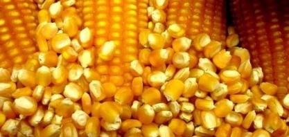 Exportação de milho do Brasil em novembro cai ante outubro