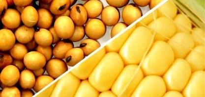Preços de soja e de milho reagem, e inflação sobe no atacado