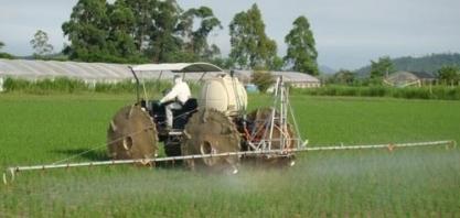 Em busca da virada nos campos de arroz