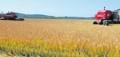 Preço do arroz reage no exterior e pode ajudar produtor em 2018