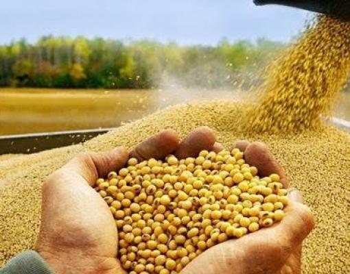 Transporte de soja segue forte apesar de desafios por vírus | Brasilagro