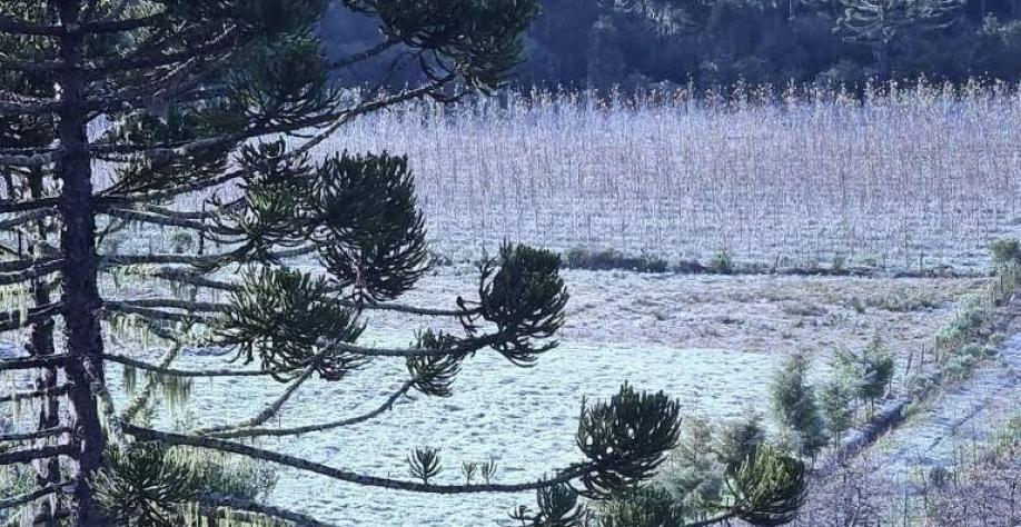 Agricultores temem perdas com previsão de geada e frio histórico